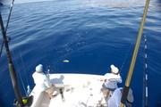 dolphin-0409.jpg