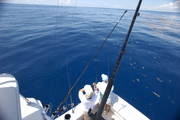 dolphin-0417.jpg