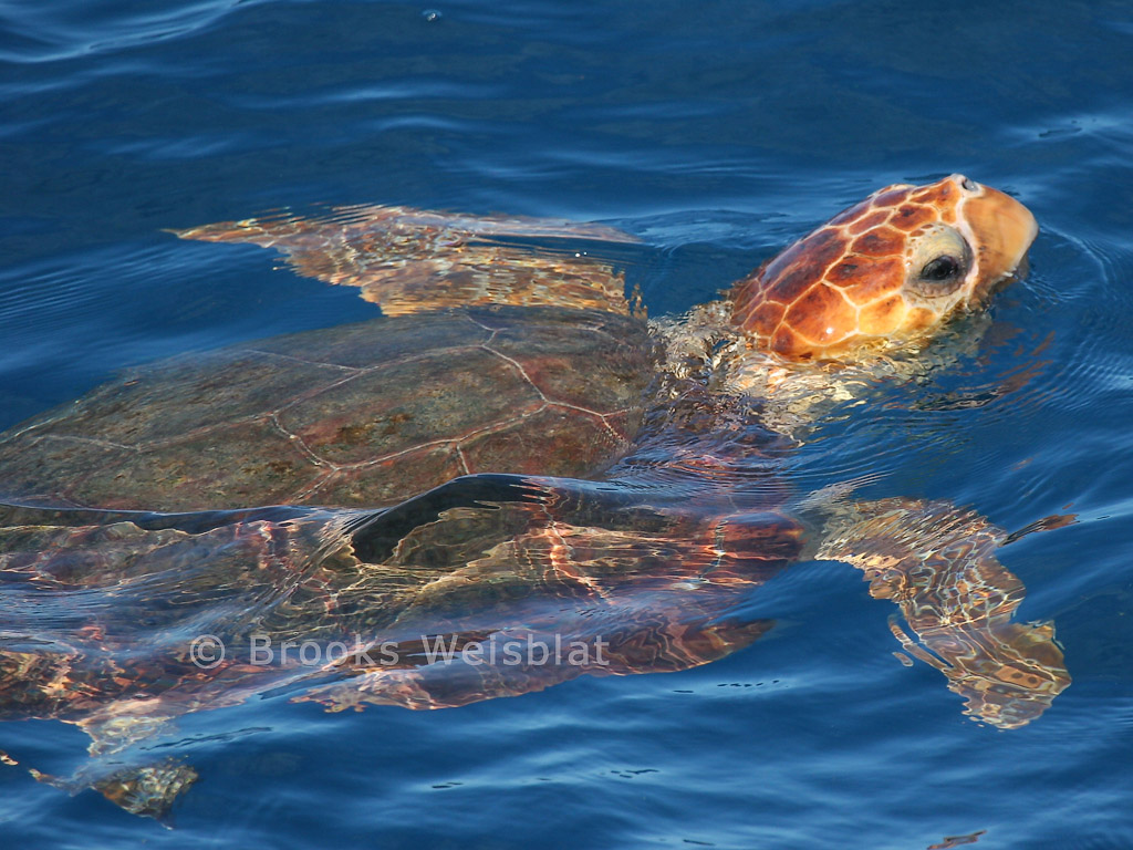 sea-turtle-1-web