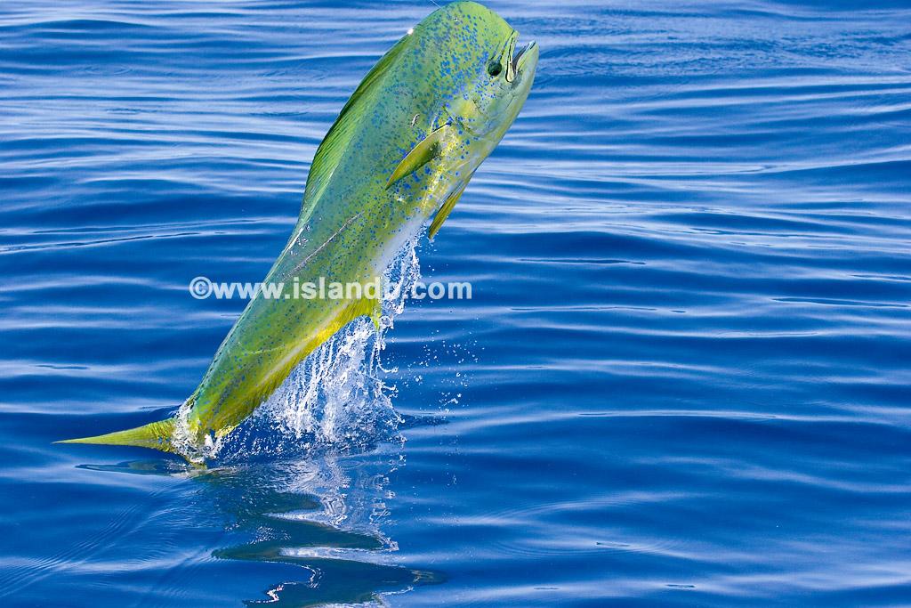 dolphin-0391.jpg