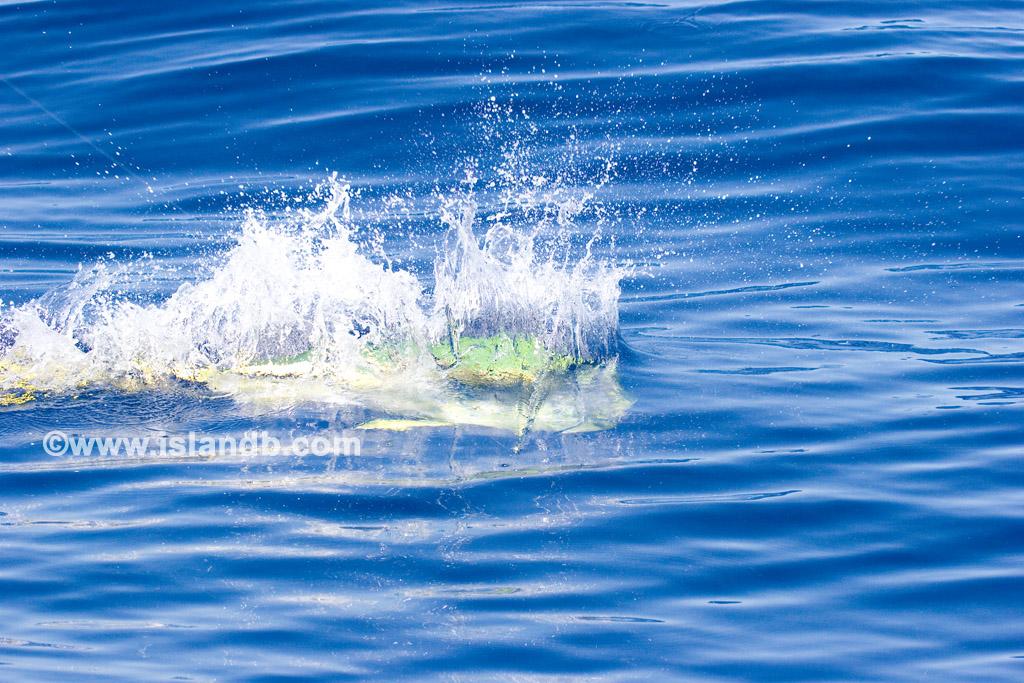 dolphin-0394.jpg