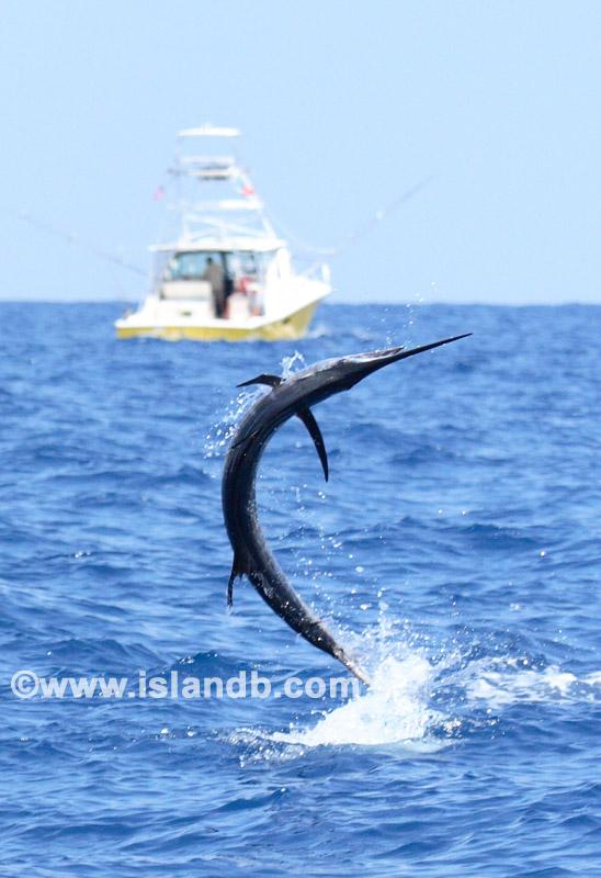 sailfish-0111.jpg