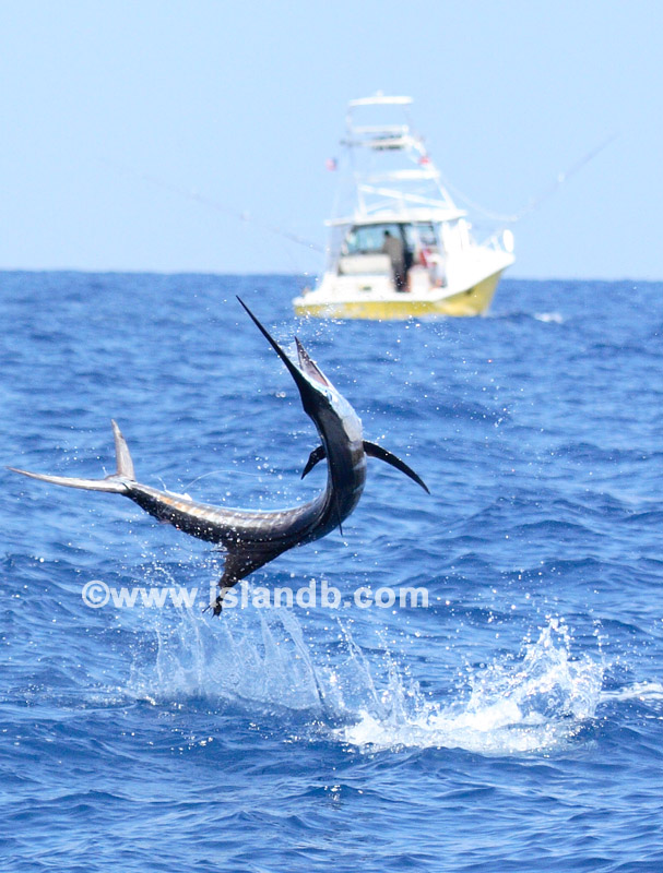 sailfish-0112.jpg