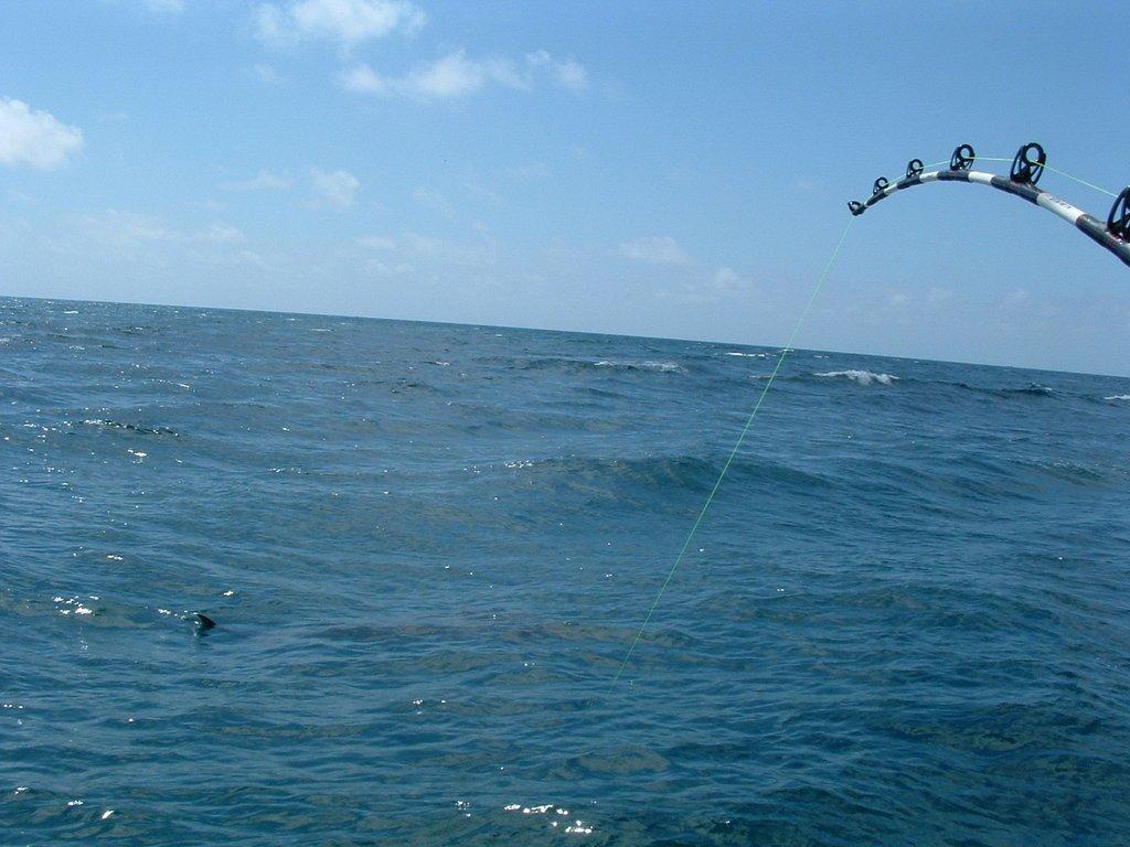 fishingshark