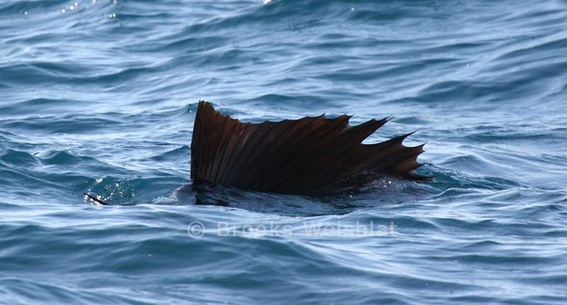 sailfish-10-30-2004-290-web